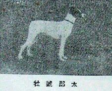 Tarou - 1930 r.